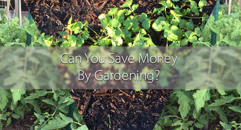 gardening and saving money