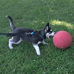 Kickball-Dog
