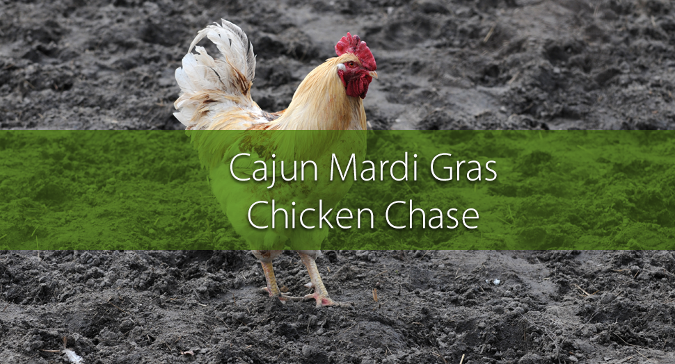 History of Cajun Mardi Gras and the Chicken Chase - chicken in the mud