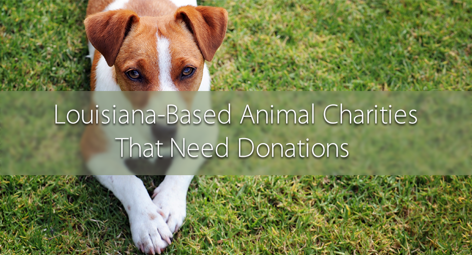 Louisiana-Based Animal Charities
