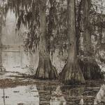 Louisiana Swampland - Scary Rougarou Habitat