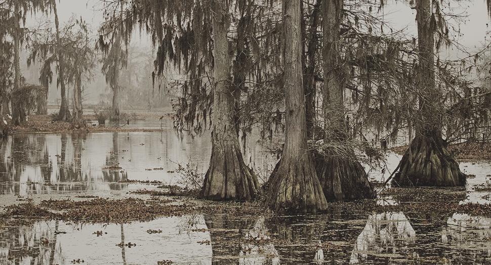 History of the Rougarou: Louisiana's Werewolf